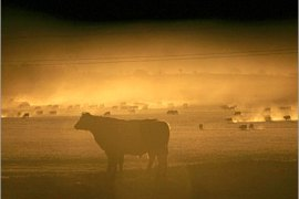 REUTERS/  Grazing cattle raise a cloud of dust as they scratch for food on a drought-affected farm near Goulburn, about 170 km (105 miles) southwest of Sydney, in this October 29, 2006 file