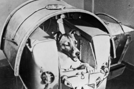 (FILES) A handout picture released 13 November 1957 by the TASS agency shows the dog Laika, the first living creature ever sent in space, onboard Sputnik II. Fifty years
