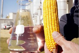 AFP(FILES) This October 4, 2004 file photo shows Norm Crain displaying an ear of corn and a beaker of 200 proof ethanol produced at the Adkins Energy ethanol production facility near Lena, Illinois. Blamed for a spike in food prices, its