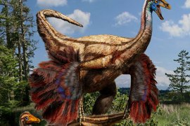 This handout Artistic reconstruction provided October 25, 2012 shows a feathered ornithomimid dinosaur found in Alberta, Canada. The ostrich-like dinosaurs in the original Jurassic Park movie were portrayed as a herd of scaly, fleet-footed animals being chased by a ferocious Tyrannosaurus rex. New research published in the prestigious journal Science reveals this depiction of these bird-mimic dinosaurs is not entirely accurate — the ornithomimids, as they are scientifically known, should have had feathers and wings. The new study, led by paleontologists Darla Zelenitsky from the University of Calgary and François Therrien from the Royal Tyrrell Museum of Palaeontology, describes the first ornithomimid specimens preserved with feathers, recovered from 75 million-year-old rocks in the badlands of Alberta, Canada. AFP PHOTO/HANDOUT/UNIVERSITY OF CALGARY