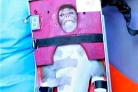 A still image from an undated video footage released on January 28, 2013 by Iran's state-run English language Press TV shows a monkey that was launched into space. Iran said on Monday it had launched the live monkey into space, seeking to show off missile delivery systems that are alarming to the West given Tehran's parallel advances in nuclear technology.   REUTERS/Press TV via Reuters TV (IRAN – Tags: ANIMALS SCIENCE TECHNOLOGY POLITICS TPX IMAGES OF THE DAY) NO ACCESS IRAN / BBC PERSIAN TV / VOA PERSIAN NEWS NETWORK (RESTRICTION IMPOSED LOCALLY BY IRANIAN AUTHORITIES) ATTENTION EDITORS – THIS IMAGE WAS PROVIDED BY A THIRD PARTY. FOR  EDITORIAL USE ONLY. NOT FOR SALE FOR MARKETING OR ADVERTISING CAMPAIGNS. THIS PICTURE IS DISTRIBUTED EXACTLY AS RECEIVED BY REUTERS, AS A SERVICE TO CLIENTS. NO SALES. NO ARCHIVES. NO COMMERCIAL USE