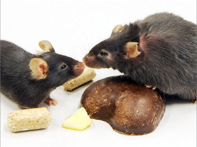 سم فئران على رفوف ليدل الغذائية بألمانيا