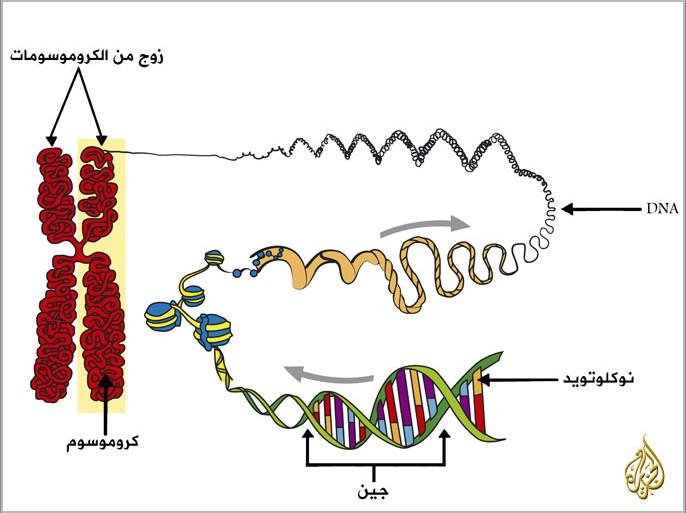 الجينات الوراثية سر الحياة والتنوع