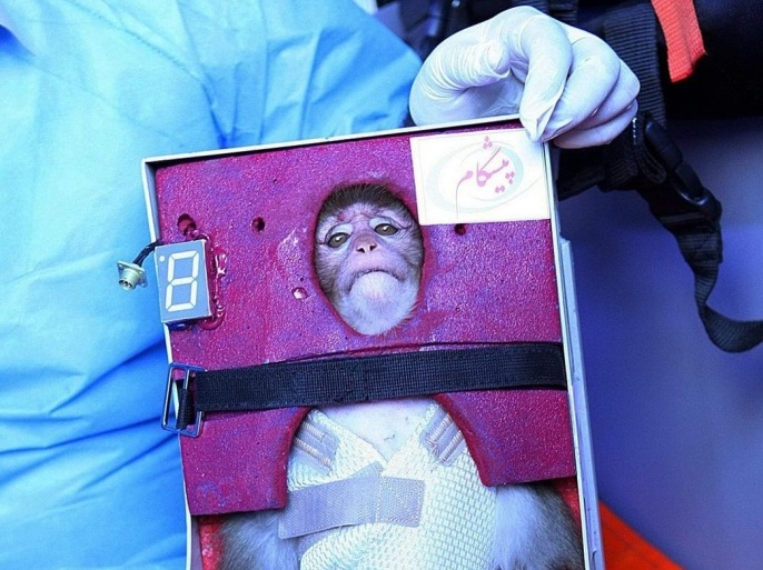 (FILE) A file picture date 28 January 2013 shows an Iranian scientist holding a live monkey at an unknown location in Iran, which Iranian state media reported had returned alive to the Earth after it traveled in a capsule to orbit. Reports on 14 December 2013 state that Iran has successfully sent a monkey into space for the second time this year, President Hassan Rowhani said. The monkey, named Fargam, was launched into orbit in a rocket that used liquid fuel for the first time, the ISNA news agency reported, and returned to Earth safely. There was no immediate information of when the launch took place. EPA/STRINGER *** Local Caption *** 50686986