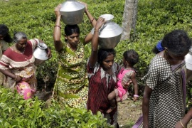 A picture made available on 17 March 2016 shows female estate workers carrying water  to their homes in the tea state of Hatton 127 kms from Colombo, Sri Lanka 12 March 2016.  Lack of proper sources of water is also another problem as the workers have to walk kilometers at a time just to get the water needed for the day. History says that south Indian Tamils were brought to the island as laborers by the British who ruled the Island completely for about 150 years till independence was granted in 1948. This Indian origin minority Tamil population has swelled up to 800,000 with the majority still living and working in tea and rubber estates in the Central part of the Island. Despite the economic contribution rendered by these people to one of the top three foreign exchange earners of the Island, the benefits enjoyed by the people of estate sector has been minimal  but scarce and developing in a very slow phase, which had made water, sanitary, healthcare, education, electricity, care for the aged and other healthy lifestyle aspects and reasonable salaries rather dreams than reality to these people.