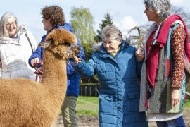 GEESTHACHT, GERMANY – APRIL 20: A dementia patient (C) with her guides spends the day at an alpaca farm as therapy in the village of Krukow on April 20, 2017 near Geesthacht, Germany. Dementia patients have the opportunity to pet and feed the animals, participate in farm chores, walk on the 40 hectares of farm property and socialize with one another, all of which act as a sort of therapy to stimulate the patients and help them to connect with their surroundings. The pro