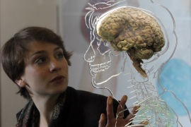 BRISTOL, UNITED KINGDOM – MARCH 10:  Nicole Briggs looks at a real human brain being displayed as part of new exhibition at the @Bristol attraction on March 8, 2011 in Bristol, England. The Real Brain exhibit – which comes with full consent from a anonymous donor and needed full consent from the Human Tissue Authority – is suspended in a large tank engraved with a full scale skeleton on one side and a diagram of the central nervous system on the other and is a key feature of the All About Us exhibition opening this week.  (Photo by Matt Cardy/Getty Images)