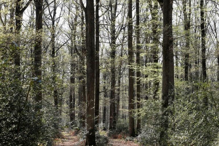 توزع الغابات يعتمد على التحالفات بين النباتات والميكروبات
