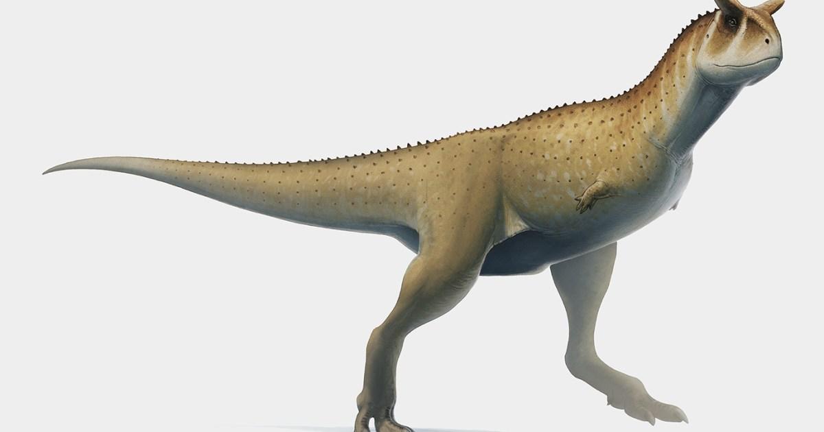 بالصور حيوانات غريبة عاشت على الأرض قبل ملايين السنين