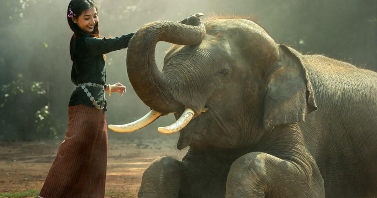 السياحة البرية حيوانات مبتسمة لا أحد يهتم بعذاباتها