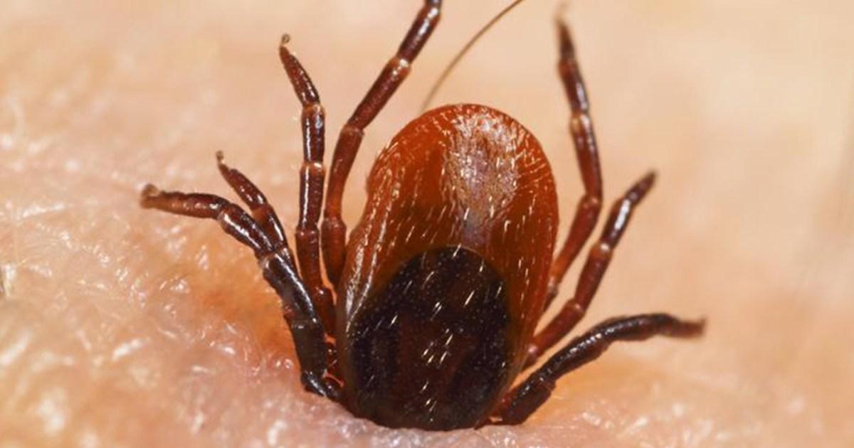 برغوث أم بعوض أم بق كيف تمي ز لدغات الحشرات وما علاجها