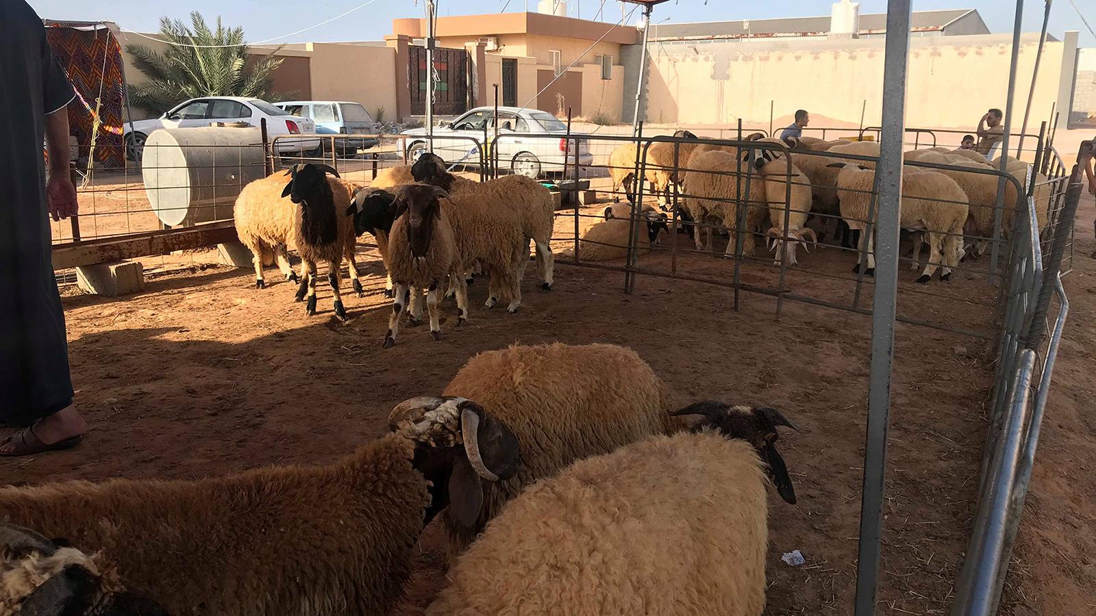 العيد في ليبيا غلاء الأضاحي يعمق جراح الحرب