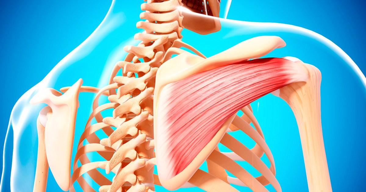 التهاب الأوتار في الكتف إليك الأسباب والأعراض