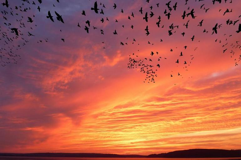 تحلق الطيور في السماء مجموعة طيور حمامة طائر تحلق السماء Png وملف Psd للتحميل مجانا