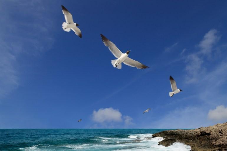 الطيور يمكنها سماع الموجات تحت الصوتية التي تولدها الأعاصير والزلازل وأمواج تسونامي (غيتي إيميجز)